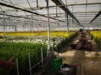 Flores - Flor Cortada Alhama de Murcia - 1