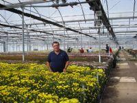 Flores - Flor Cortada Alhama de Murcia - 3
