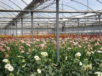 Flores - Flor Cortada Alhama de Murcia - 14